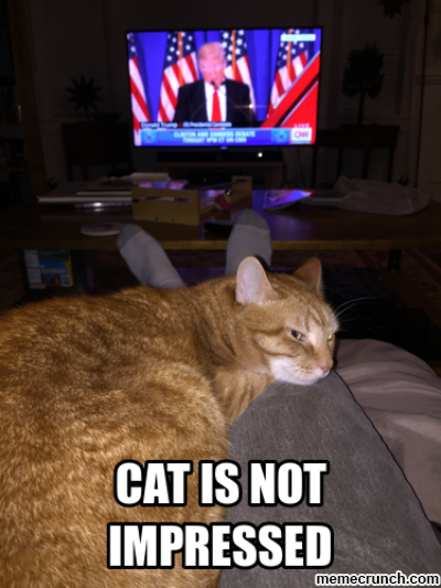 Cat Is Not Impressed Donald Trump Know Your Meme