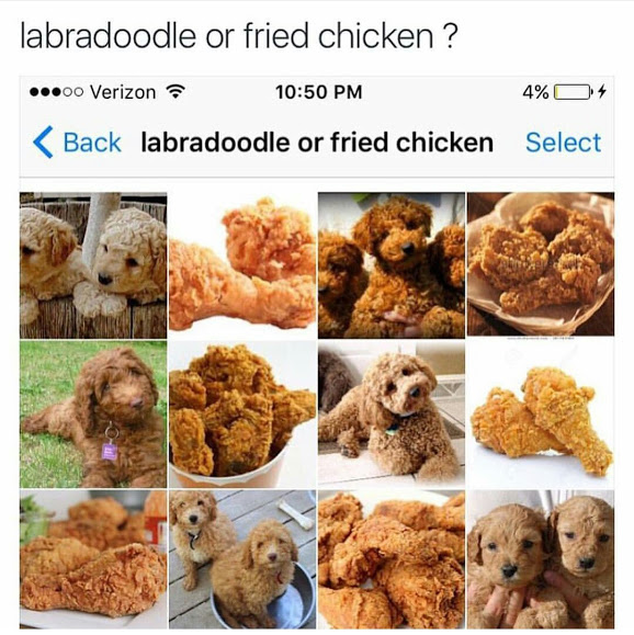 Labradoodle Or Fried Chicken Puppy Or Bagel Know Your Meme