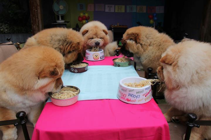 Resultado de imagen para chow chow eating