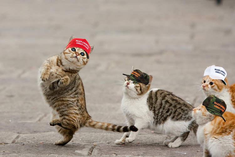 Cats Make America Great Again Know Your Meme