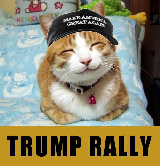 Happy Cat Make America Great Again Know Your Meme