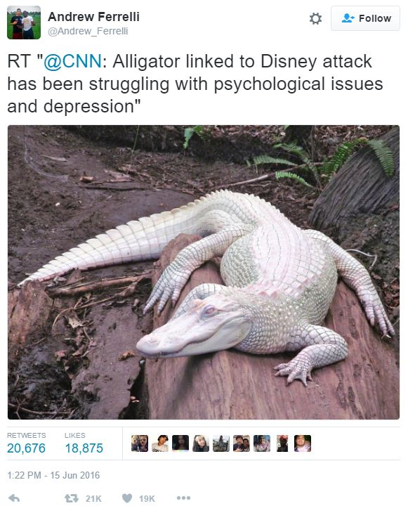 Andrewferrelli Tweet 2016 Disney Resort Alligator Attack Know