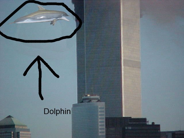 Dolphin Architecture Light Fixture