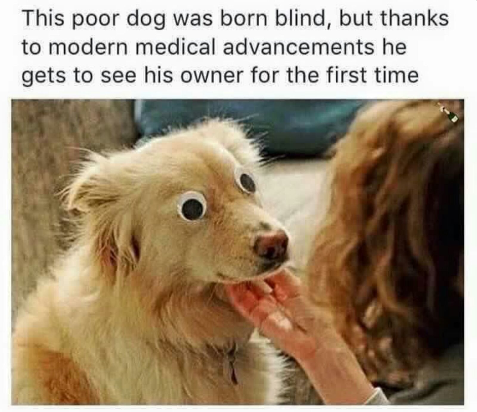 f60 believe in miracles dogs know your meme