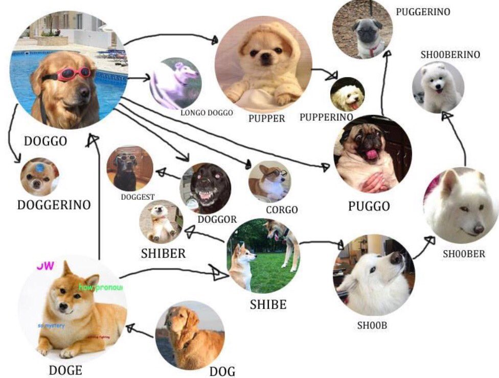 Doggo Chart Doggo Know Your Meme