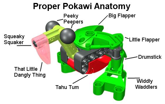 Proper Pokawai Anatomy | Proper Anatomy | Know Your Meme