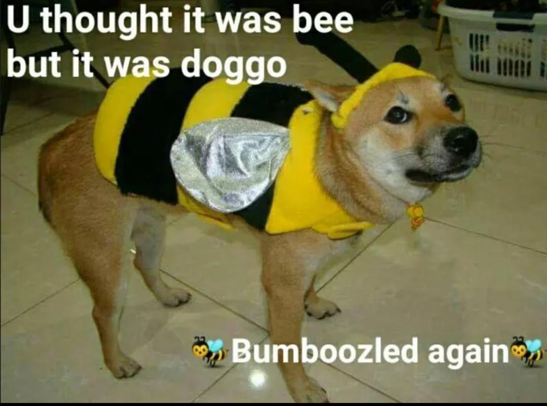 Beeirl Doggo Know Your Meme