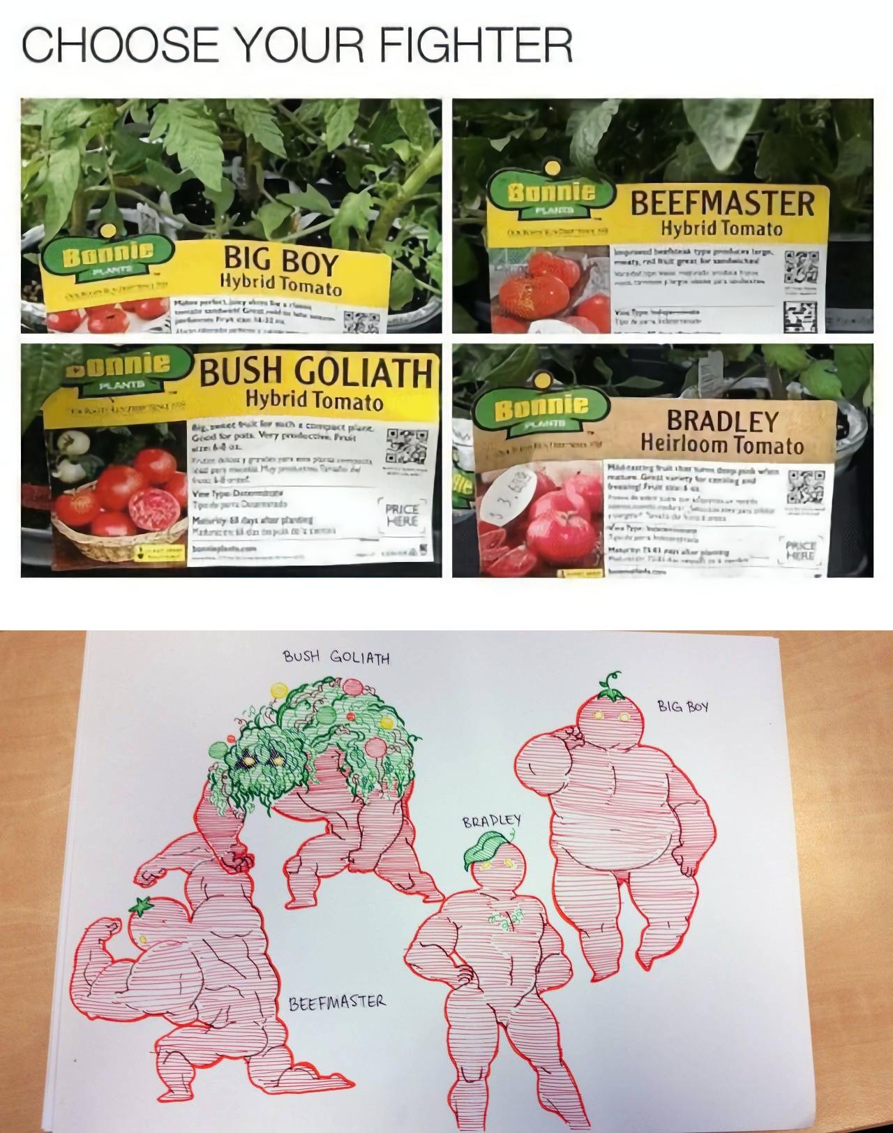 Choose Your Fighter Bunnie Beefmaster Hybrid Tomato Boy 2r Bush Goliath
