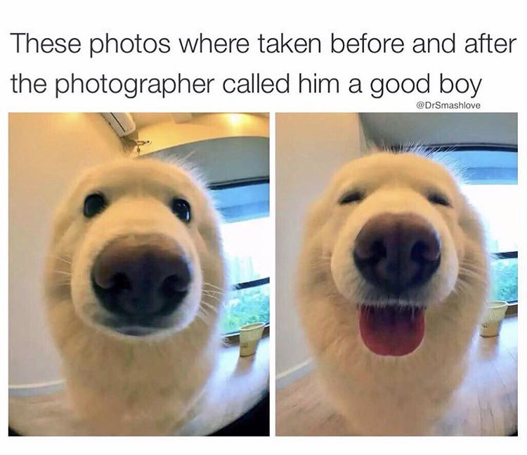 whos a good boy meme