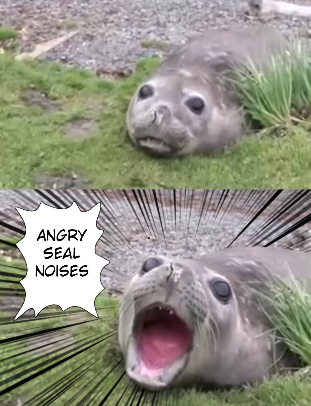 Meme Animal Noises - Madihah Buxton