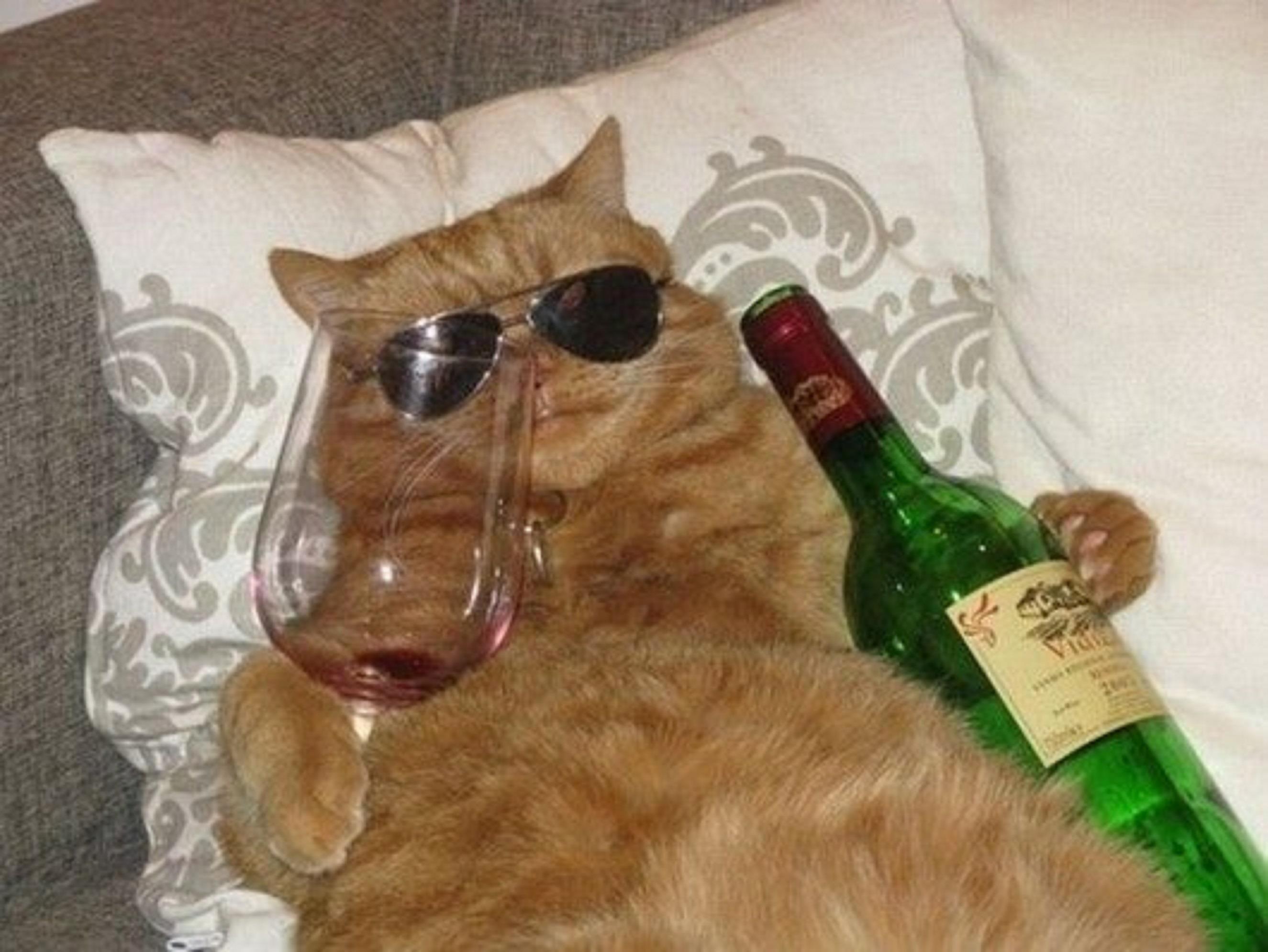Image result for drunk cat