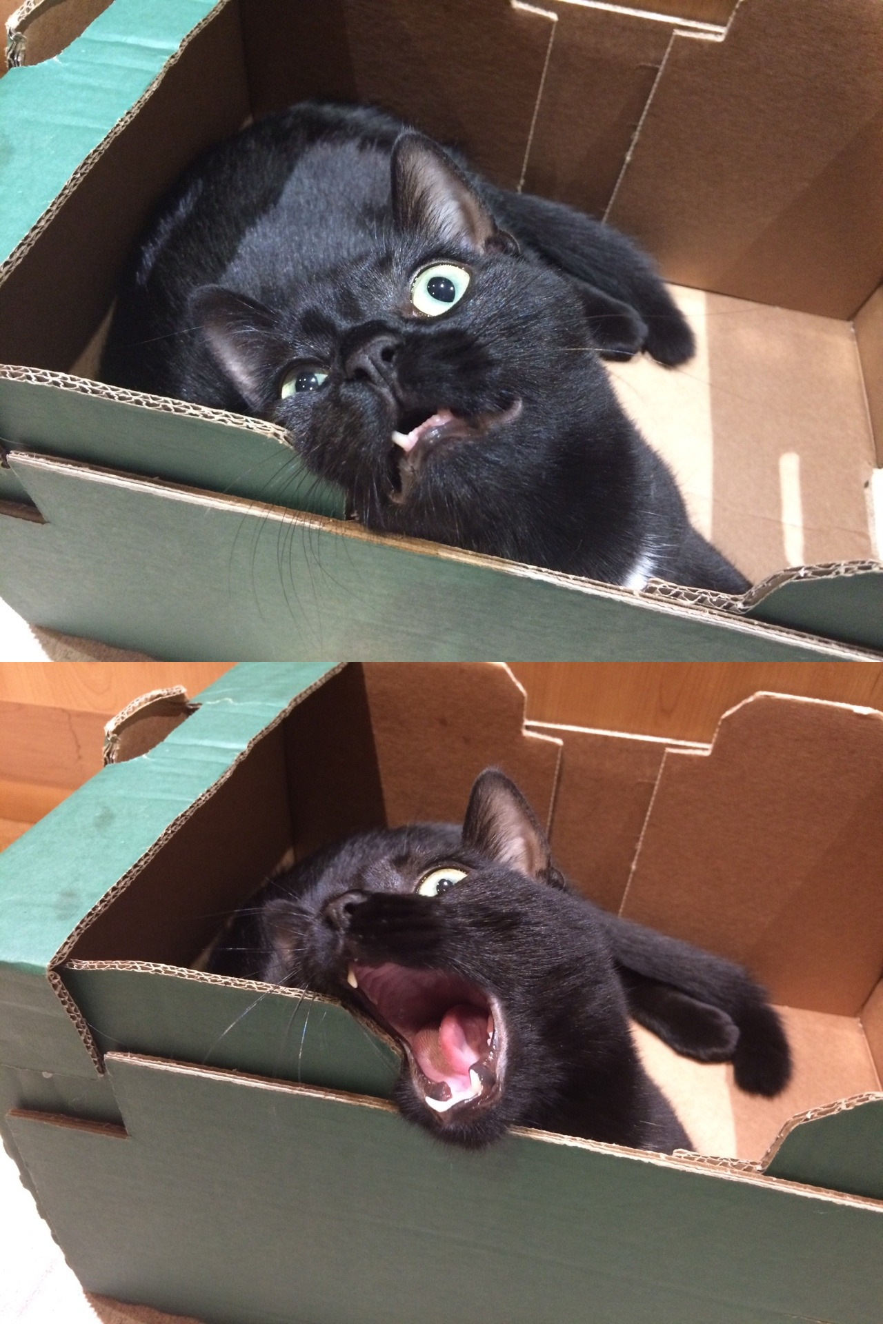 Angry Cat Noises
