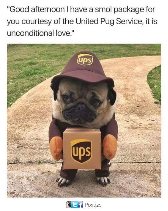 united pug service wholesome memes know your meme