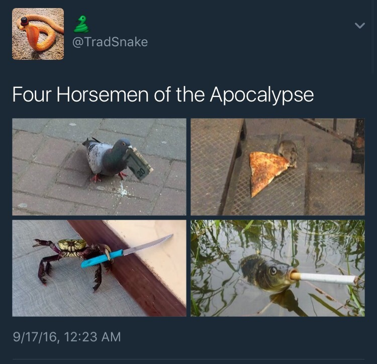 deadly animals four horsemen of the apocalypse know your meme