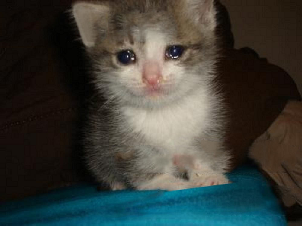 The original picture | Crying Cat | Know Your Meme
