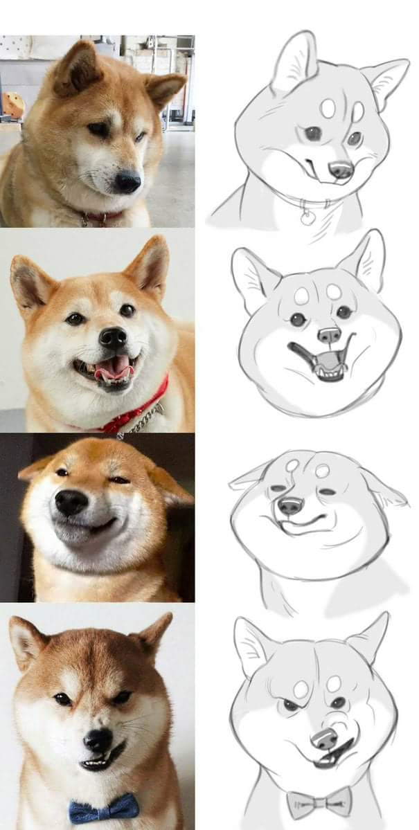 How To Draw Doge Doge Know Your Meme