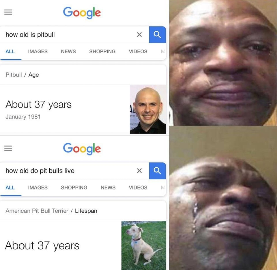 Google How Old Is Pitbull News Shopping Videos All Imagesnews Pitbull Age About 37 Years January