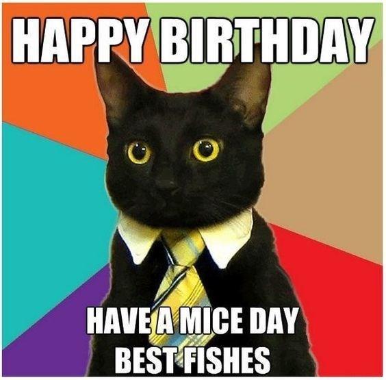 birthday meme cat Happy Birthday From Business Cat | Business Cat | Know Your Meme birthday meme cat