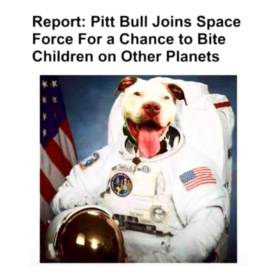 for a chance to bite children on other planets | Dogs | Know
