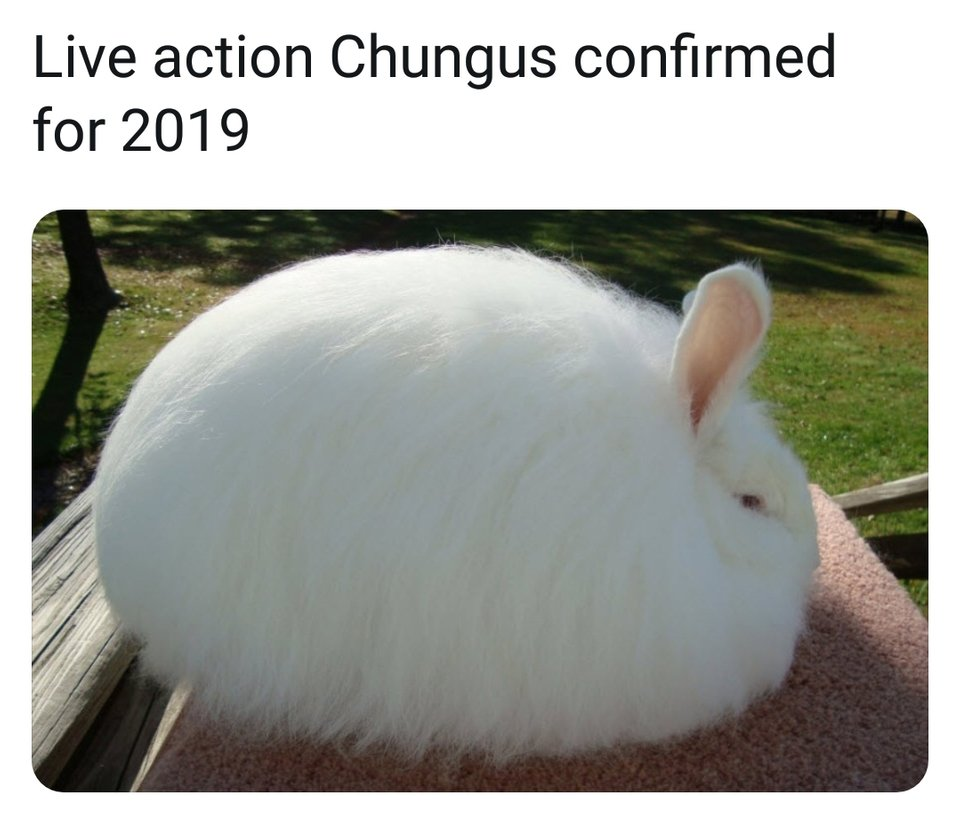 Live Action Chungus Confirmed For 2019 Big Chungus Know Your Meme