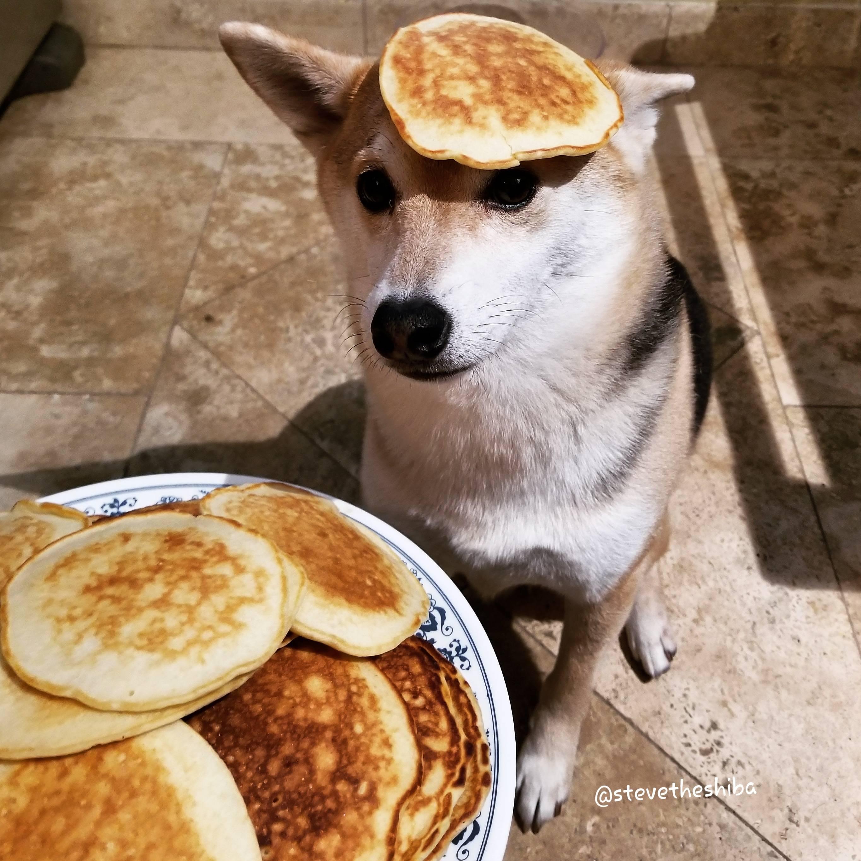 Pancakes   Shiba Inus / Shibes   Know Your Meme