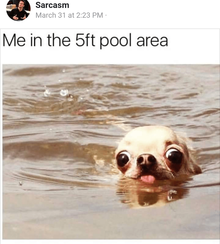 Chihuahua swimming | Dogs | Know Your Meme