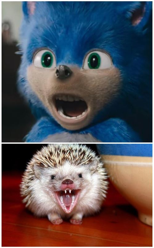 Hedgehog Teeth Sonic The Hedgehog 2020 Film Know Your Meme