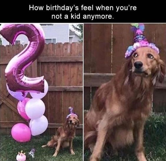 Dog With Party Hat Suspicious Of Party Decorations | Happy