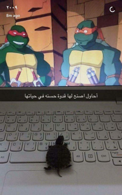 When I Grow Up I Wanna Be Like Them Teenage Mutant Ninja Turtles Know Your Meme