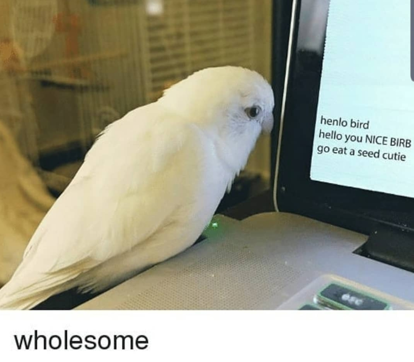 Happy Birb Is Best Birb R Wholesomememes Wholesome Memes