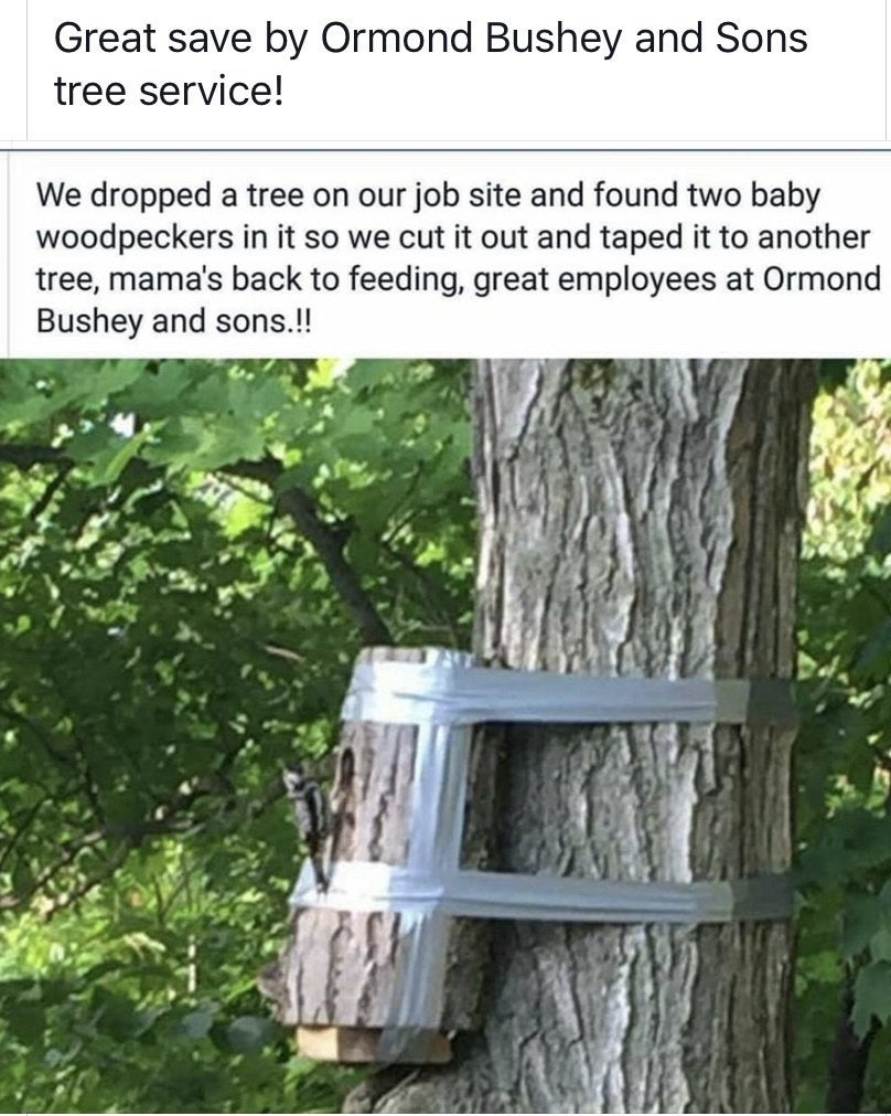 Wholesome Tree Service R Wholesomememes Wholesome Memes Know Your Meme