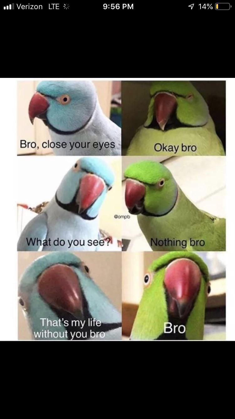 Wholesome Birds R Wholesomememes Wholesome Memes Know Your Meme
