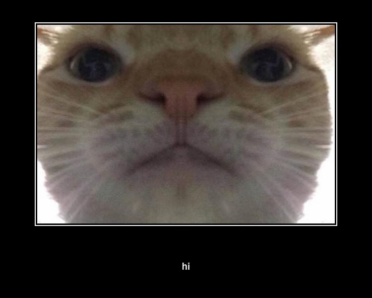 hi | /r/okbuddyretard | Staring Cat / Gusic | Know Your Meme