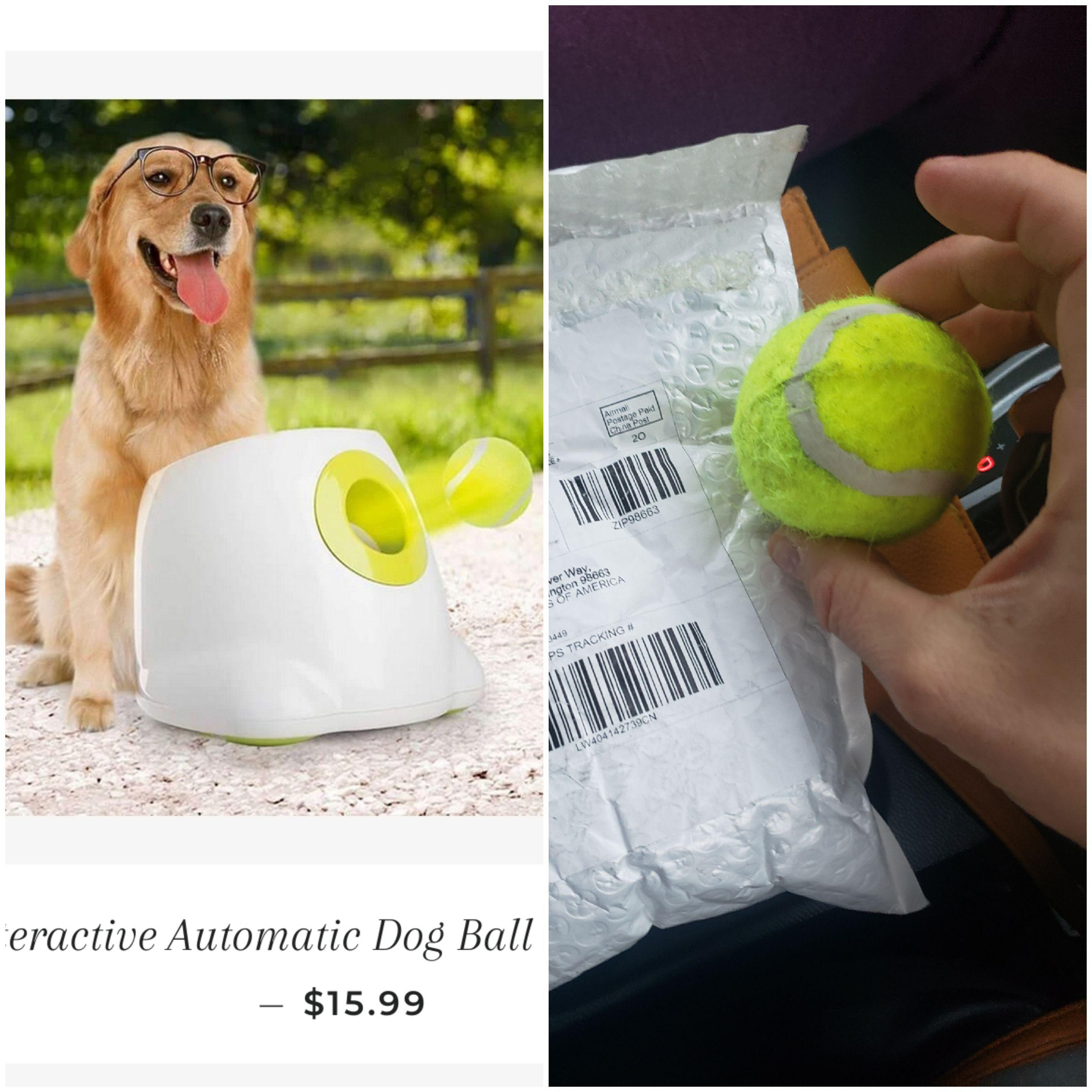 Ordered An Automatic Dog Ball Launcher Got A Solid Foam Tennis Ball Instead R Expectationvsreality Expectation Vs Reality Know Your Meme