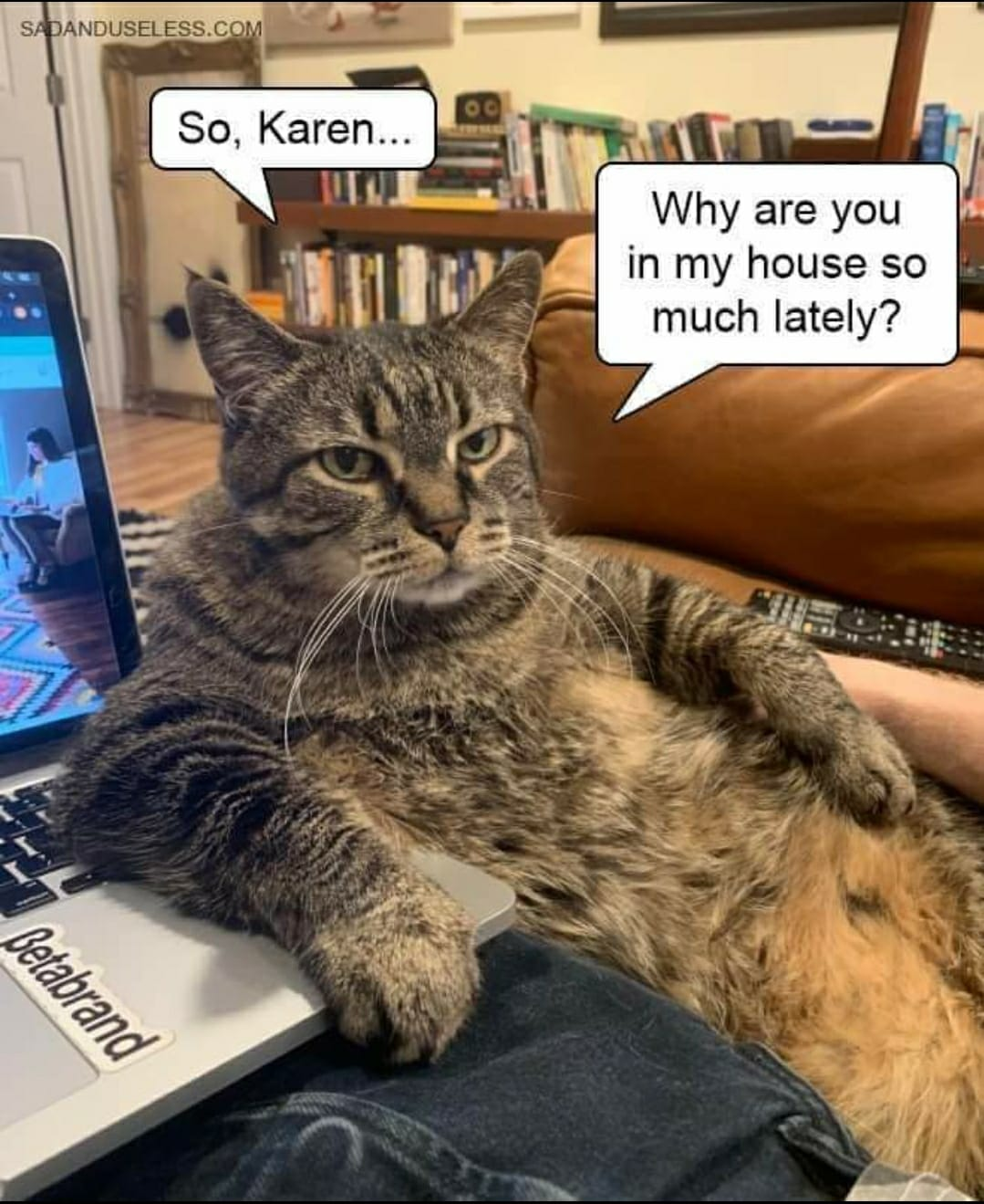 Karen's cat needs to know when this quarantine will end ...